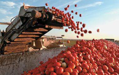 بازیگران عمده جهانی در تولید رب گوجه