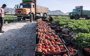 سازماندهی صنایع کشاورزی در ایران