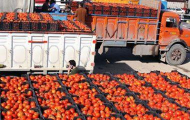 روند کاهشی صادرات رب گوجه از ایران