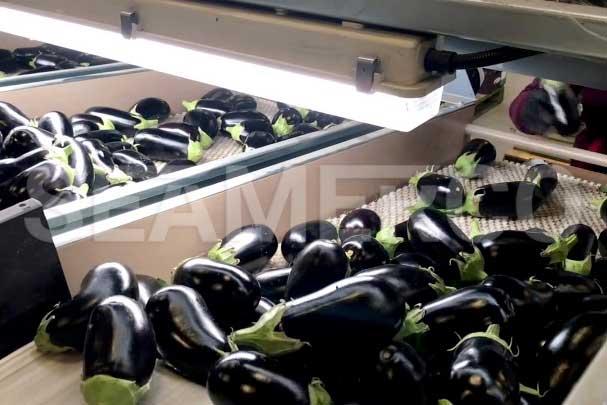 خط تولید ترشی بادمجان سیمرکو