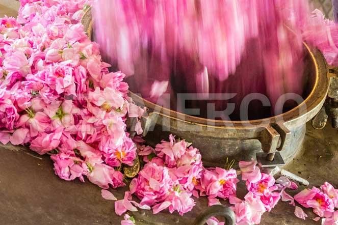 خط تولید مربای گل سیمرکو