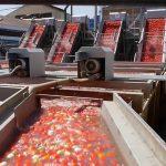 هزینه راه ا ندازی خط تولید رب گوجه فرنگی