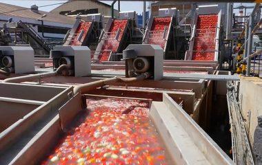 هزینه راهاندازی خط تولید رب گوجهفرنگی