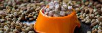 مقایسه غذای خشک و کنسروی سگ