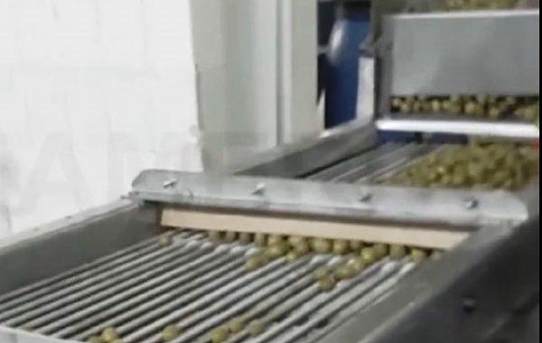 فیلم دستگاه سورتینگ زیتون